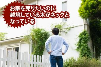 お家を売りたいのに越境している木がネックになっている