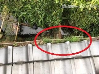 2017.12.5 樋 前 4-1